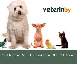 Clínica veterinária no China