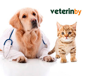 Pet Hospital Xindu Branch